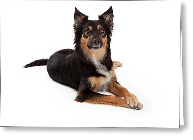Mutt Greeting Cards - Attentive Mixed Breed Dog Laying Greeting Card by Susan  Schmitz