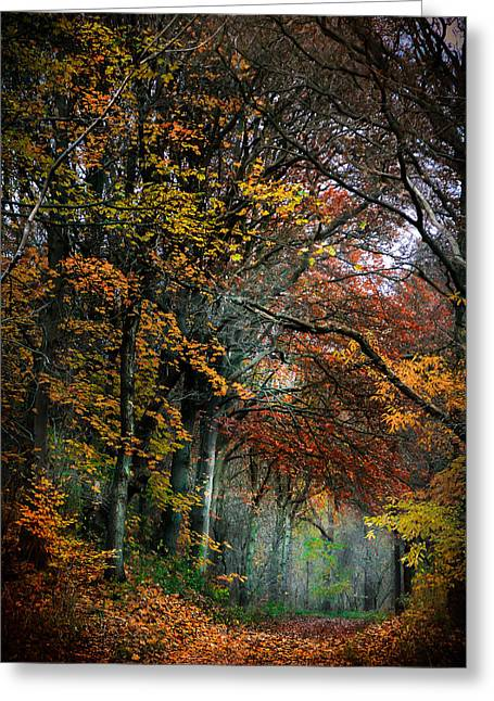 Dream Scape Greeting Cards - Atumn colors Greeting Card by Hugo Bussen