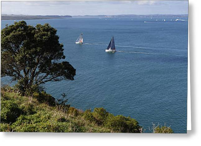 Blue Sailboats Greeting Cards - Auckland sailing Greeting Card by Les Cunliffe