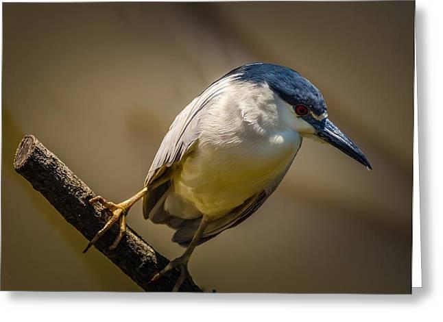 Audubon Zoo Greeting Cards - Audubon Tweeter Greeting Card by Jon Stephenson