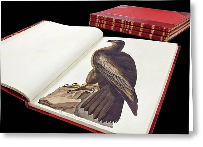 Audubon's The Birds Of America Greeting Card by Natural History Museum, London
