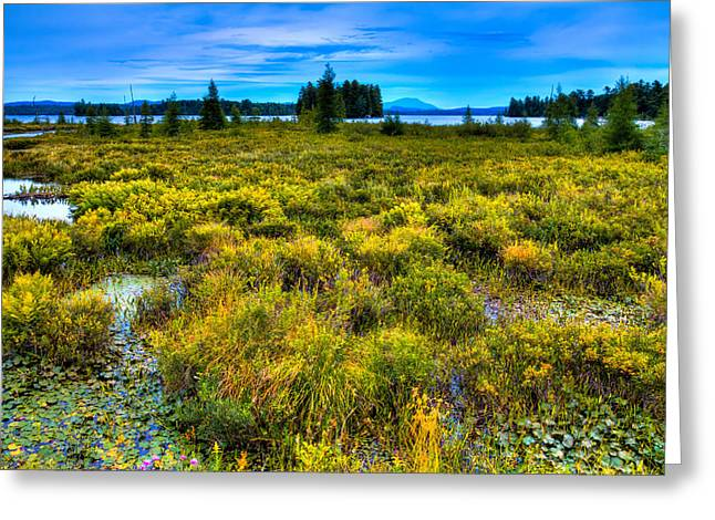 Fir Trees Greeting Cards - August on Raquette Lake Greeting Card by David Patterson