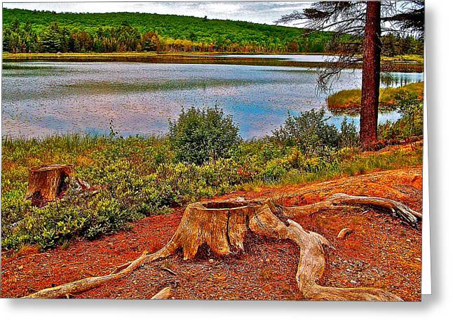 Pond In Park Greeting Cards - Aunt Betty Pond in Acadia National Park-Maine  Greeting Card by Ruth Hager