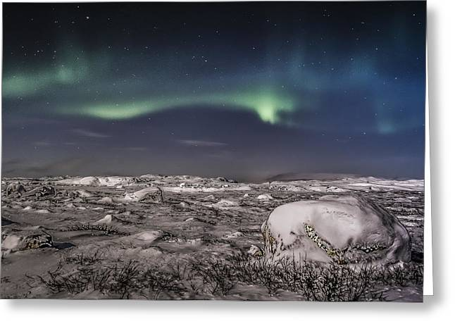 Southern Norway Greeting Cards - Aurora Borealis in Finnmark Greeting Card by Roy Haakon Friskilae