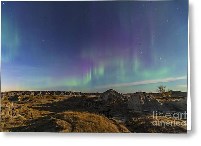 Dinosaur Provincial Park Greeting Cards - Aurora Borealis Over The Badlands Greeting Card by Alan Dyer