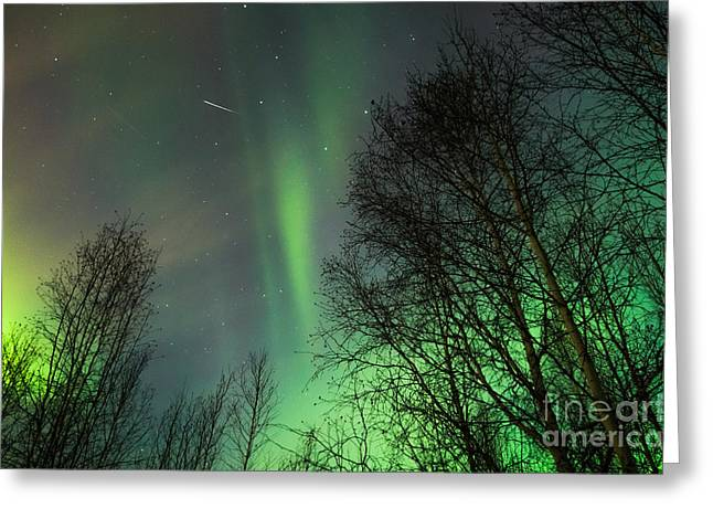 Star Pyrography Greeting Cards - Aurora Borealis with Shooting Star Greeting Card by Jason Thill