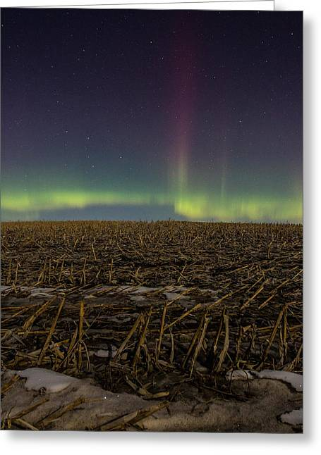 Spikes Greeting Cards - Aurora Spike  Greeting Card by Aaron J Groen
