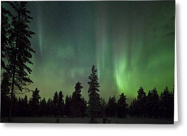 Discharging Greeting Cards - Auroral display over trees Greeting Card by Science Photo Library