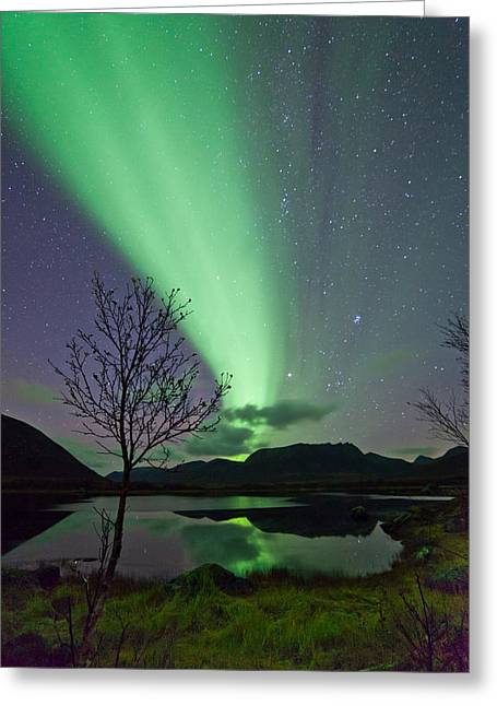 Sortland Greeting Cards - Auroras and tree Greeting Card by Frank Olsen