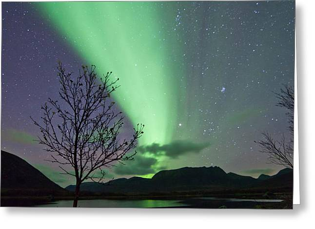 Auroras and tree Greeting Card by Frank Olsen