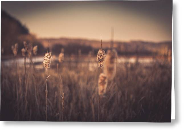 Virginia Landscape Greeting Cards - Aurous Greeting Card by Shane Holsclaw