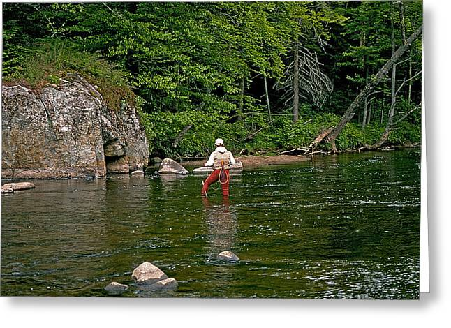 Rainbow Trout Greeting Cards - Ausable River Greeting Card by Buddy Mays