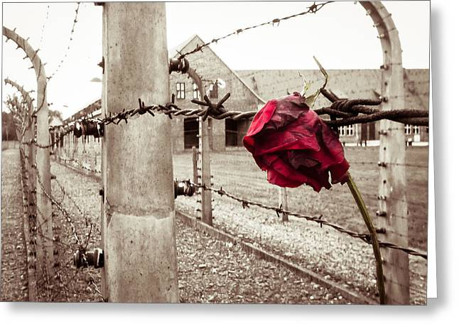 Concentration Greeting Cards - Auschwitz Greeting Card by Ian Hufton