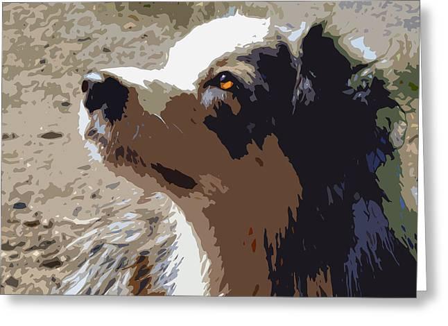 Pet Portraits Digital Greeting Cards - Aussie Greeting Card by Nancy Merkle