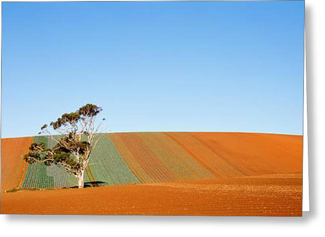 Emptiness Greeting Cards - Australia Greeting Card by Panoramic Images