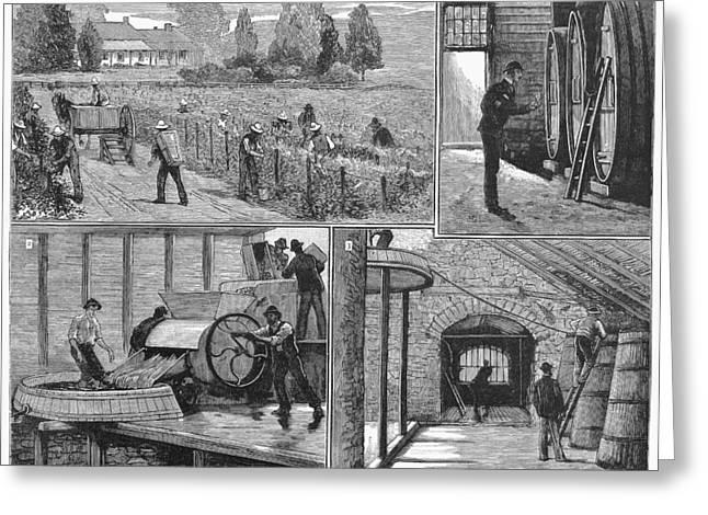 Australia Vineyard, 1883 Greeting Card by Granger