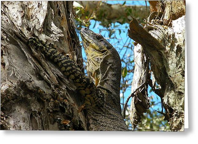 Goanna Greeting Cards - Australia Wild Animals - The Goanna Greeting Card by Jeffrey Shaw