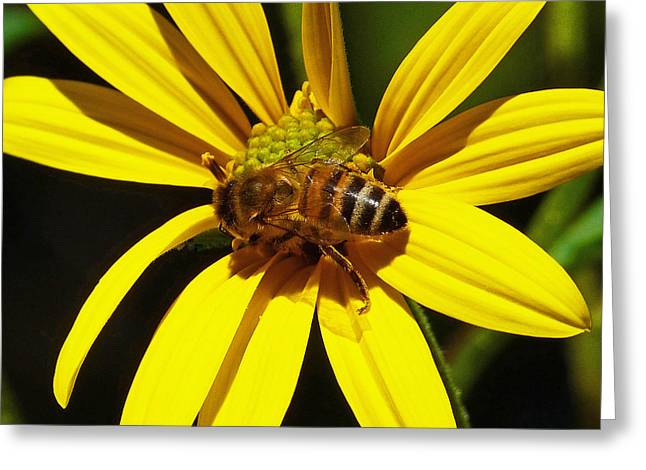 Australian Bees Greeting Cards - Australian Bee Snacktime Greeting Card by Margaret Saheed