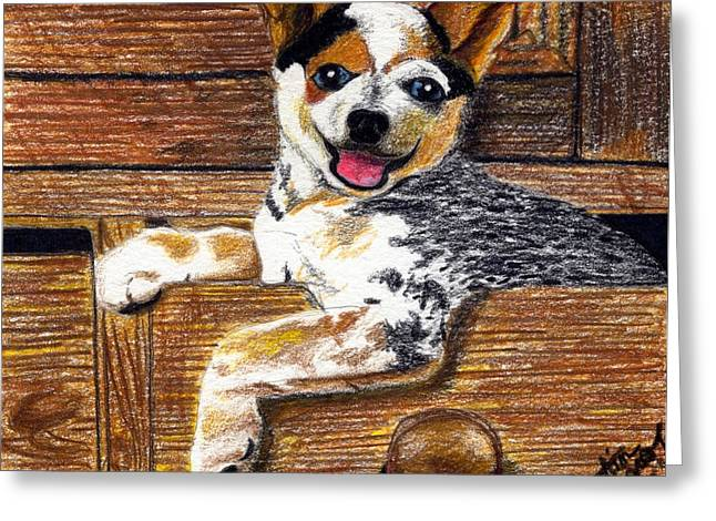 Puppies Drawings Greeting Cards - Australian Cattle Dog Puppy Greeting Card by Olde Time  Mercantile
