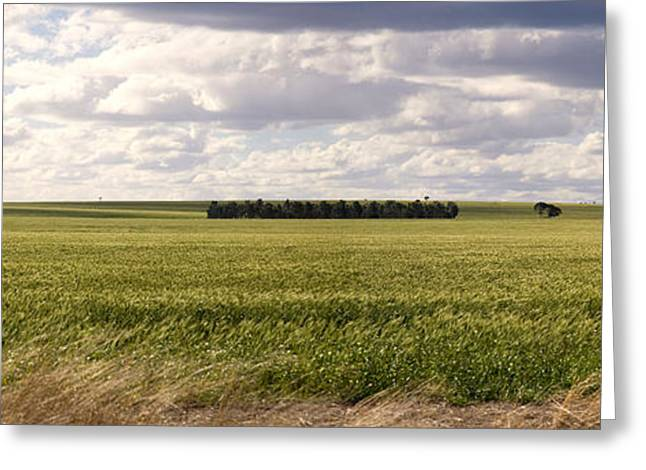 Niel Morley Greeting Cards - Australian Farming Land Greeting Card by Niel Morley