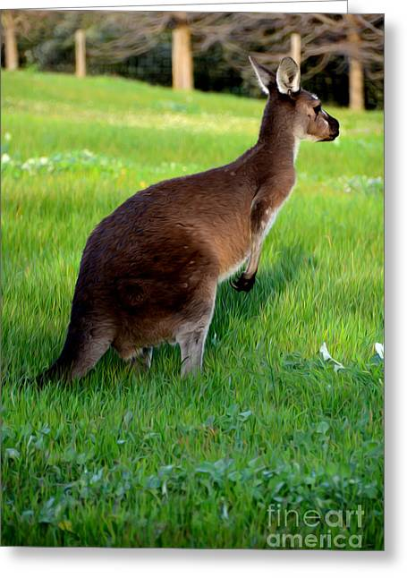 Kangaroo Digital Greeting Cards - Australian Kangaroo at Sunset Greeting Card by Phill Petrovic