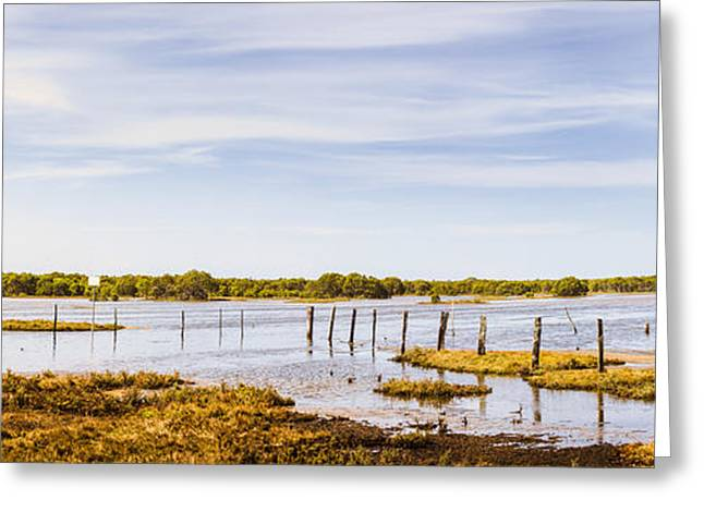Beautiful Creek Greeting Cards - Australian mangrove landscape panorama Greeting Card by Ryan Jorgensen