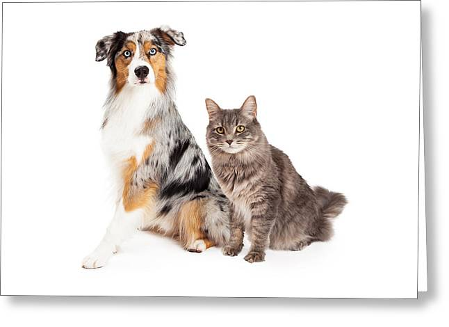 Cute Animal Portraits Greeting Cards - Australian Shepherd Dog and Tabby Cat Greeting Card by Susan  Schmitz