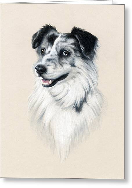 Puppies Drawings Greeting Cards - Australian Shepherd Greeting Card by Heather Mitchell