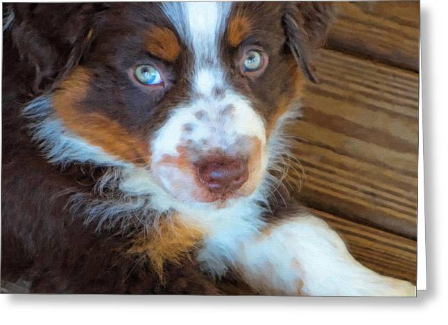 Working Dog Greeting Cards - Australian Shepherd Puppy - Rusty Greeting Card by Kenny Francis