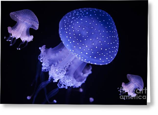 Australian Spotted Jellyfish Greeting Card by English Landscapes