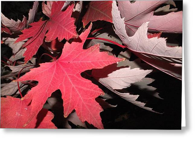 Evironment Greeting Cards - Autmn Leaves Greeting Card by FL collection