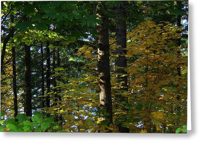 Foliage Greeting Cards - Autumn 10 Greeting Card by J D Owen