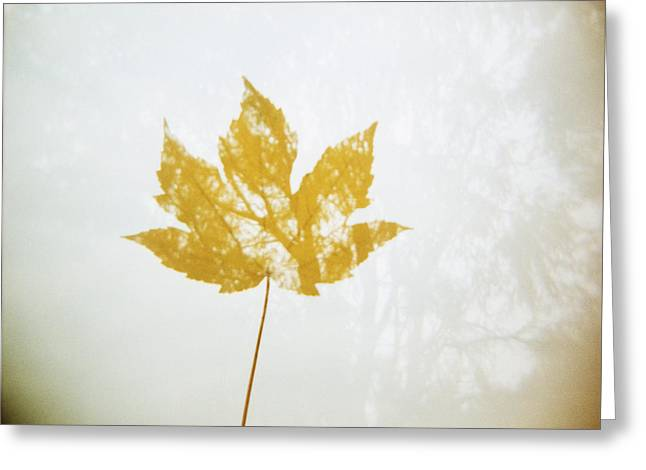 Autumn Photographs Pyrography Greeting Cards - Autumn 2.0 Greeting Card by Bence Farkas