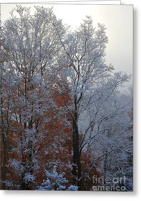Weather Greeting Cards - Autumn 33 Greeting Card by Terri Gostola