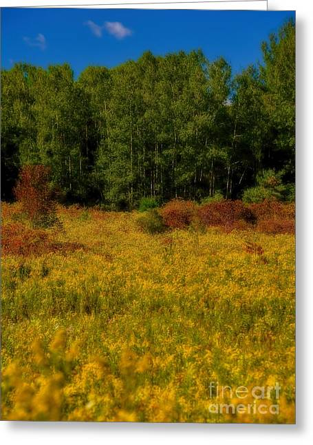 A Summer Evening Greeting Cards - Autumn - A Meadow of Goldenrod Greeting Card by Henry Kowalski