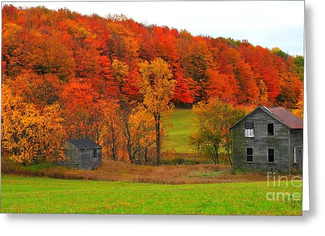 Autumn Abandoned Greeting Card by Terri Gostola