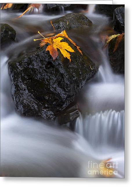 Leafs Greeting Cards - Autumn Above and Below Greeting Card by Mike Dawson