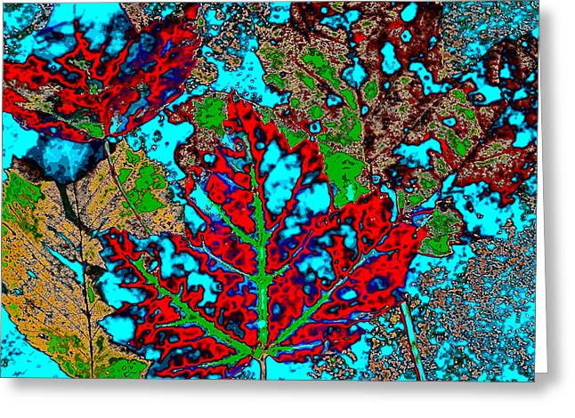 Reds Of Autumn Digital Greeting Cards - Autumn Abstract Greeting Card by David Patterson