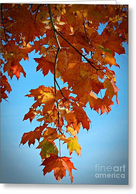 Neurotic Images Photography Greeting Cards - Autumn Against A Blue Sky Greeting Card by Chalet Roome-Rigdon