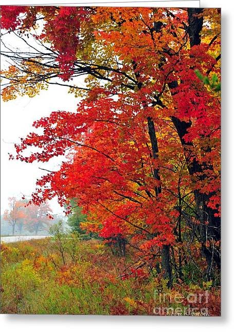 Fall Trees Greeting Cards - Autumn Along a Country Road Greeting Card by Terri Gostola