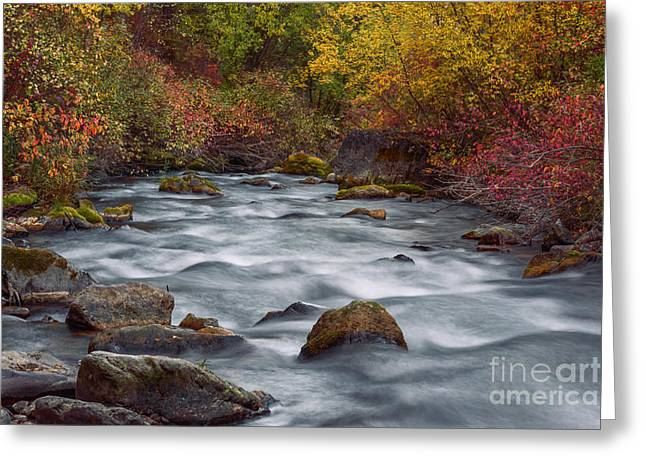 Overcast Day Greeting Cards - Autumn along Palisades Creek in Idaho Greeting Card by Vishwanath Bhat