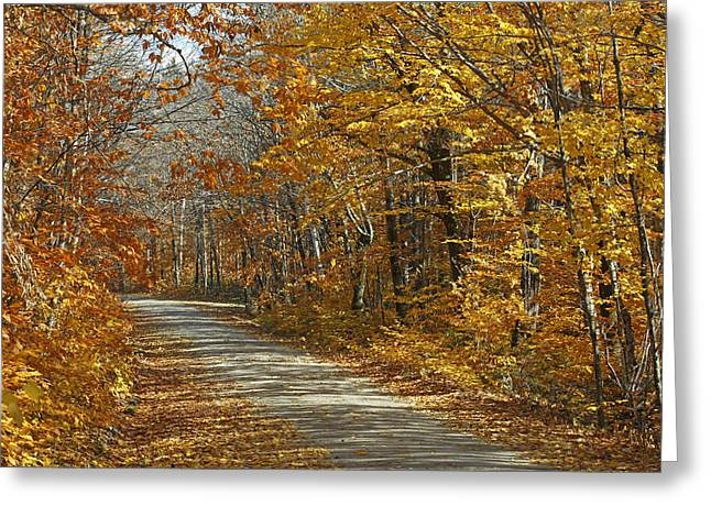 Maine Landscape Greeting Cards - Autumn American Beech  Baxter State Greeting Card by Scott Leslie