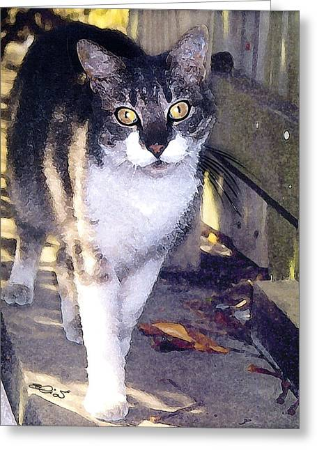 Kitten Prints Mixed Media Greeting Cards - Autumn And The Feral Greeting Card by Elia Peters