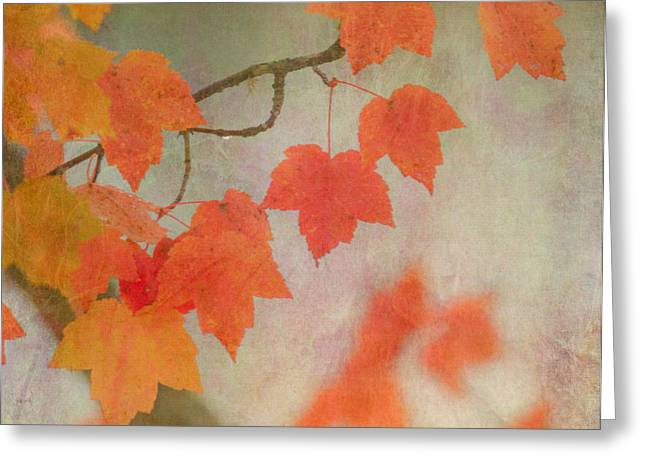 Red Maple Tree Branches Greeting Cards - Autumn Greeting Card by Angie Vogel
