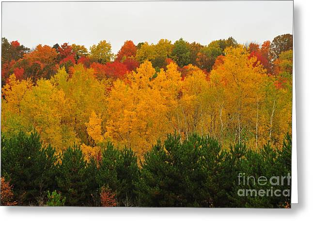 Colors Greeting Cards - Autumn Aspen Greeting Card by Terri Gostola