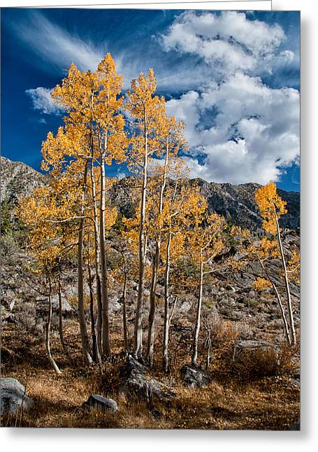 Fall Grass Greeting Cards - Autumn Aspens Greeting Card by Cat Connor
