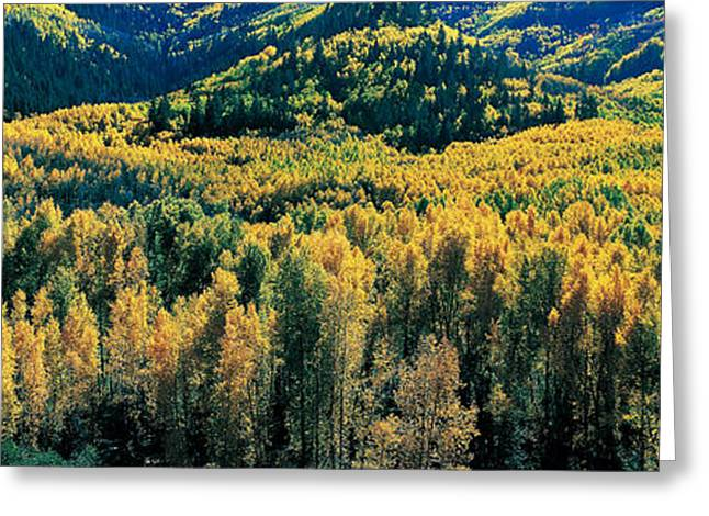 Mountain Greeting Cards - Autumn Aspens, Colorado, Usa Greeting Card by Panoramic Images