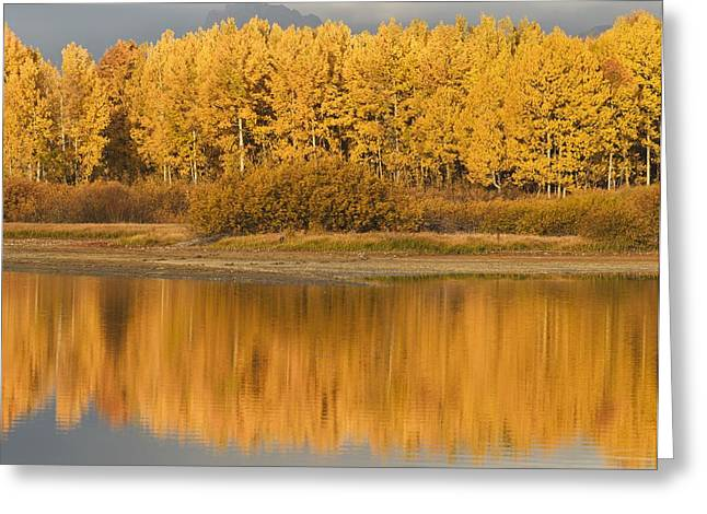 Greater Yellowstone Ecosystem Greeting Cards - Autumn Aspens Reflected In Snake River Greeting Card by David Ponton
