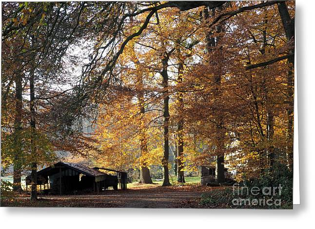 Herfst Greeting Cards - Autumn at Ampsen estate Greeting Card by Ernst Dingemans