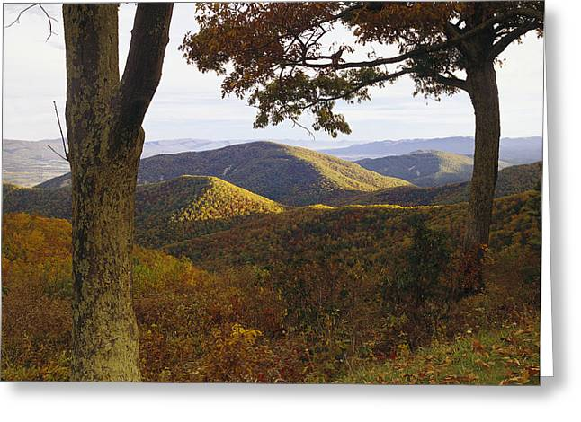 Photos Of Autumn Greeting Cards - Autumn At Brown Mt In Shenandoah Np Greeting Card by Tim Fitzharris